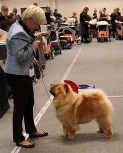 Chow Chow Stagebo's Angel Of The Morning Aars 2015