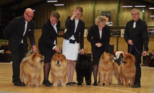 DCCK Chow Chow Kennel Piuk Chow