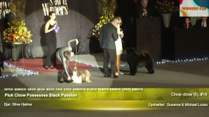 Chow Chow ved Show Of Winners Piuk Chow Possesses Black Passion