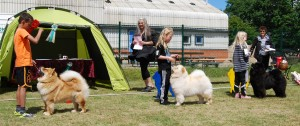 Barn og Hund Soerbymagle