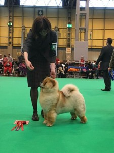 Chow Chow Orinells On And On Crufts 16