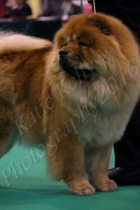 Chow Chow Piuk Chow Sweet Dreams Of Phantasy For Hiswin