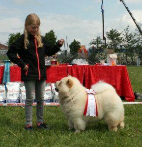 Chow Chow - Barn & Hund konkurrence