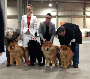 Chow Chow Kennel Piuk Chow