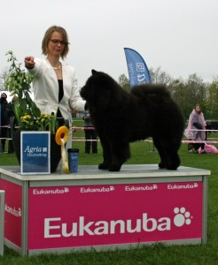 Chow Chow Piuk Chow Possesses Black Passion Roskilde