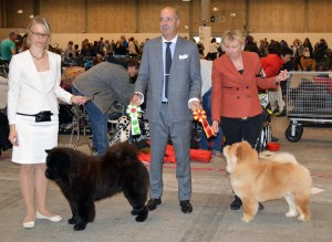 Chow Chow BIR Purpl Sheides Vogue La Champ og BIM Piuk Chow Possesses Black Passion Herning 2015