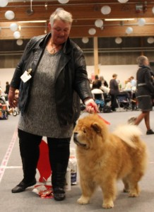 Chow Chow Veteran Cracker Aars 2015