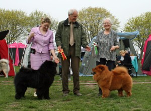 Chow Chow Bidachows Amazing Armani & Incipit True Gem