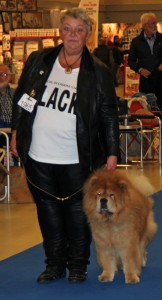 Chow Chow Veteran Cracker Herning 2015