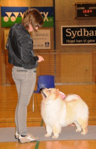 Chow Chow creme, Orinells Live Your Dream ny dansk champion