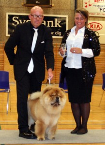 Chow Chow Ny dansk champion Piuk Chow Pirates Boy Of Phantasy Soerby 15