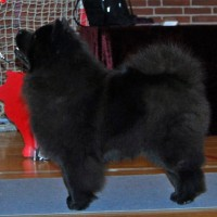 sort chow chow Stagebo's Zip Code