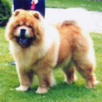 Chow Chow 1993 stagebos-christmas-cracker