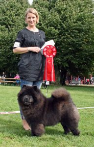 Chow Chow Stagebos Zip Code