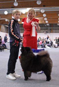 Chow Chow Barn og Hund