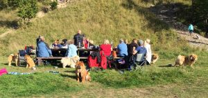 Chow Chow hygge