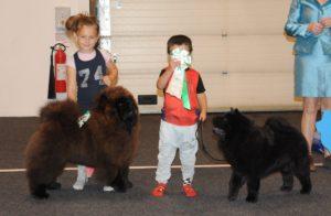 Chow Chow og barn og hund konkurrence
