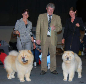 Chow Chow Orinell's It's A Knockout og Orinell's Live your Dream Mette Maj Lindorff