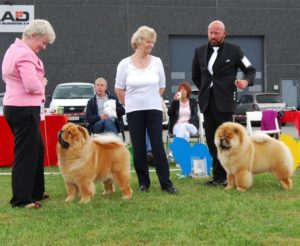 Chow Chow Stagebo's Angel of The Morning Susanne Danielsen og Piuk Chow Pirates Boy Of Phantasy Dennis Hessner