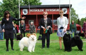 Chow Chow Pei Fang Eye Catcher Mette Maj Lindorff og Piuk Chow Possesses Black Passion Stine Hjelme