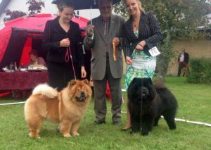 Chow Chow Bidachows O'Lovely Othello Susanne Dammann