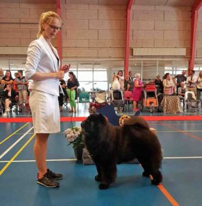 Chow Chow Piuk Chow Possesses Black Passion Stine Hjelme