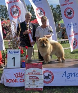 Chow Chow BIG Piuk Chow Pirates Boy Of Phantasy Vivian Brudlykke Bornholm