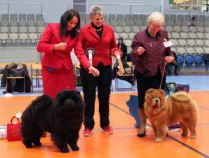 Chow Chow BIR Bon Triumph Number One Susanne Dammann BIM Bakkebos Royal Roxanna Susanne Danielsen Dommer Kathleen Ridding