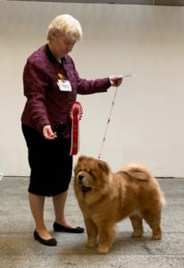 Chow Chow Bakkebo's Royal Roxanna, Susanne Danielsen