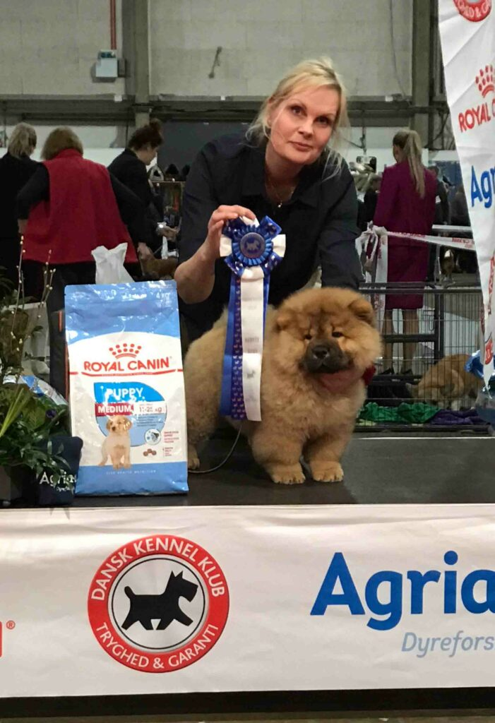 Chow Chow hvalp Cherry Best In Show 2 baby Fredericia 2019, Sabrina Nielsen