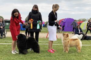 Chow Chow Bon Triumph Number One og Hjelme China In Your Hand ejet af Susanne Dammann og Stine Hjelme, Dommer Gabriela Richard