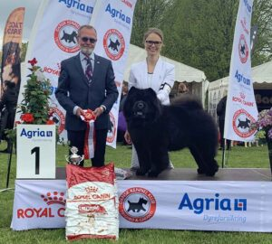 Chow Chow veteran Piuk Chow Possesses Black Passion Best In Show, Stine Hjelme og Svend Løvenkjær