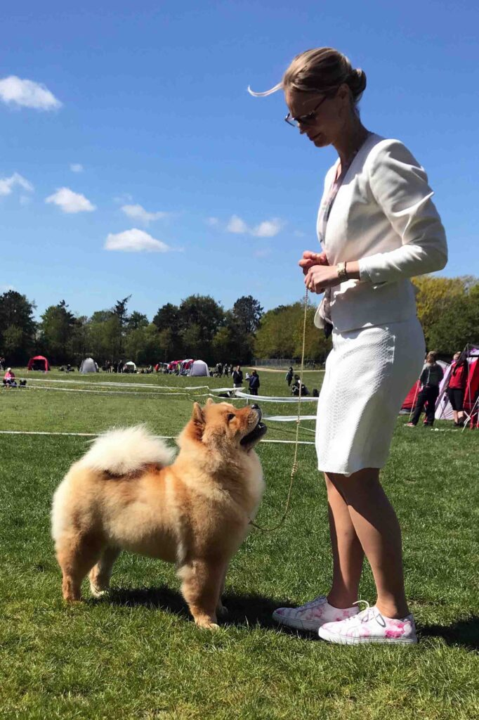 Chow Chow Hjelme China In Your Hand Junior Champion Stine Hjelme