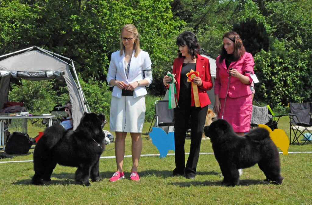 Chow Chow BIR Bon Triumph Naomi Susanne Dammann og BIM Piuk Chow Possesses Black Passion Stine Hjelme, Liz Worgan