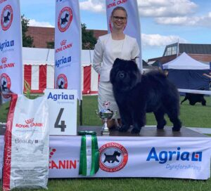 Chow Chow Best In Show Piuk Chow Possesses Black Passion, Stine Hjelme